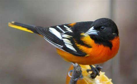 bird species at patterson park patterson park audubon center