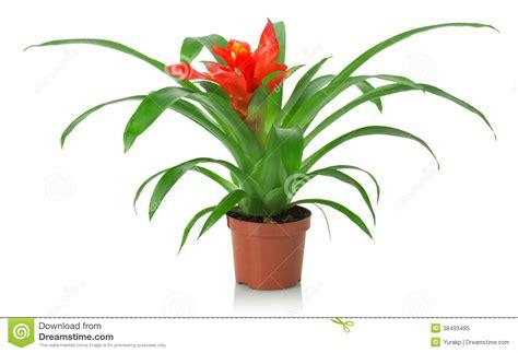 poudre blanche sur plantes d int rieur plante interieur rouge la pilounette