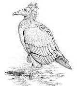 turkey vulture coloring page turkey vultures in a desert coloring page free printable