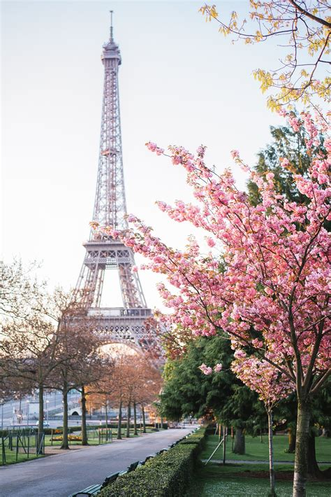 wallpaper keren paris paris in spring is magical cherry blossoms are amazing