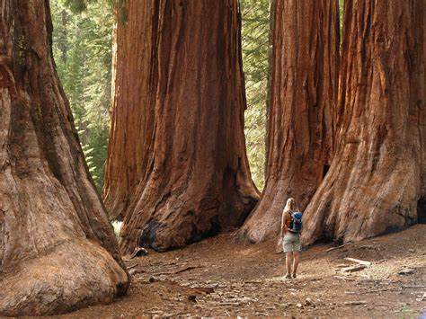The Most Scenic Drives In America by Yosemite Sequoia Amp Kings Canyon National Parks Hotel