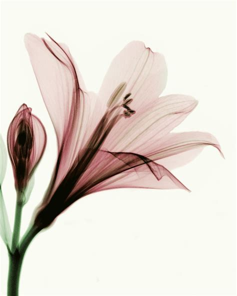 x ray flower tattoo on the left inner arm tattoo artist x ray flowers downloadable ray flower by coopr on