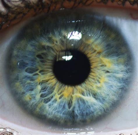 rarest color best 25 eye colors ideas on