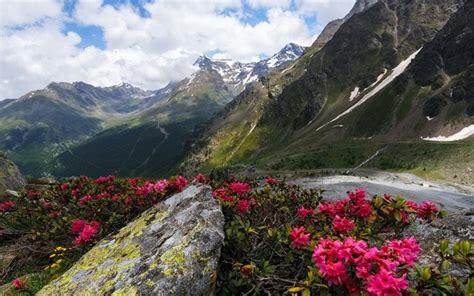 paesaggi di fiori scarica sfondi fiori di montagna pendio della montagna