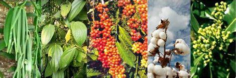 Pupuk Cair Grow More pupuk organik cair d i grow home