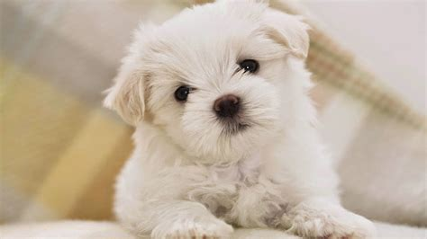 cute puppy hd wallpaper free download hd wallpapers dogs best wallpaper cute dogs hd wallpapers free download