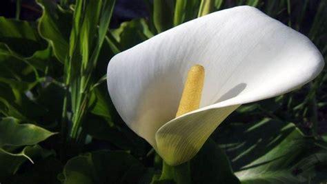 types  houseplants  clean indoor air   stress