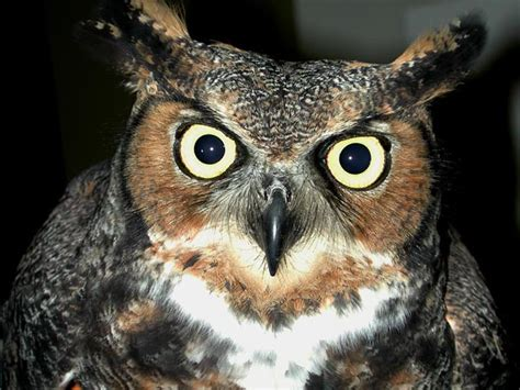 wisconsin owls identification wisconsin bird atlas seeks more volunteers for largest bird survey in state history