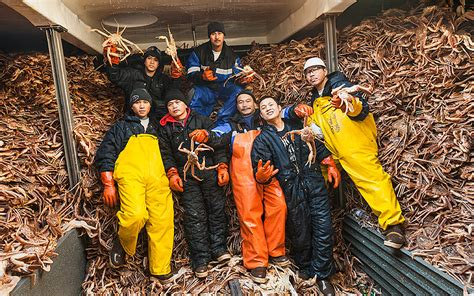what type of crabs caught in deasdliest catch bering sea opies and the reality of the deadliest catch