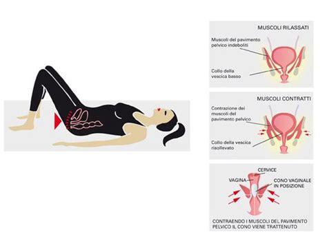 esercizi per il pavimento pelvico esercizi per rafforzare il pavimento pelvico esercizi di