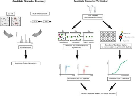 discovery workflow candidate biomarker discovery and verification workflow