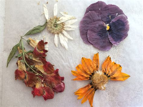 Diy Book Flower Press Free Craft From The Garden Be A From The Garden Dried Flowers