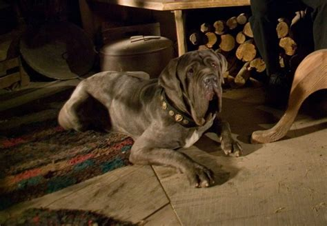 hagrid s dogs name 15 of our favorite literary dogs did your favorite canine make the list