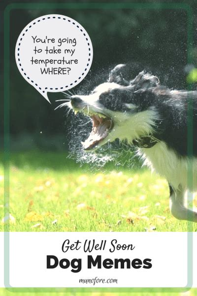Funny Get Well Meme - memes to make you smile when you are sick as a dog friday frivolity munofore