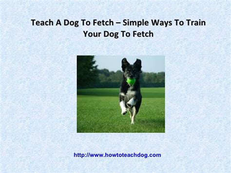 how to teach a puppy to fetch teach a to fetch simple ways to your to fetch