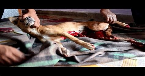signs of bleeding in dogs most saved just in time to bleeding