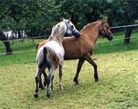 stute decken lassen ein pferdeleben