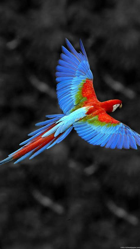 1080x1920 Beautiful Parrot Wallpapers HD
