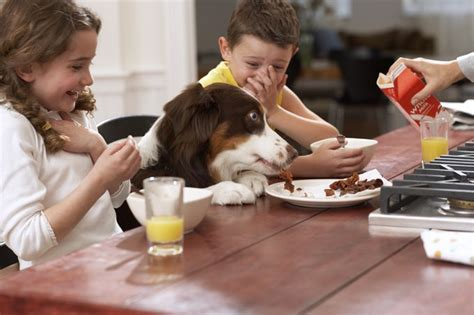 what happens to a who eats table scraps feeding food to dogs dogtime