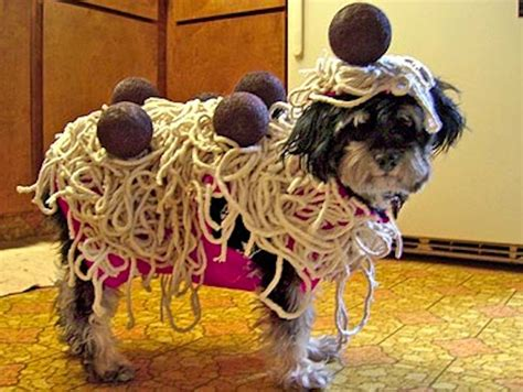 spaghetti and dogs the best costumes a letter to my