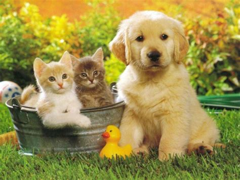 cute pictures  puppies  kittens  pets world
