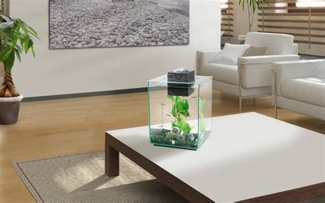 living room fish tank modern and fish tanks swell uk