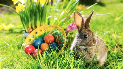 wann ostereier suchen finding easter in bunnies and baskets focus on the family