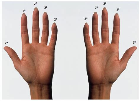 how to finger how high can you count on your fingers 187 science abc
