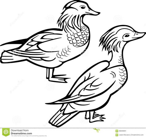 Mandarin Black And White mandarin duck clipart black and white pencil and in