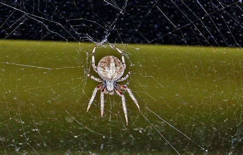 top 28 show me a wolf spider just caught a spider bodybuilding com forums clique nova york