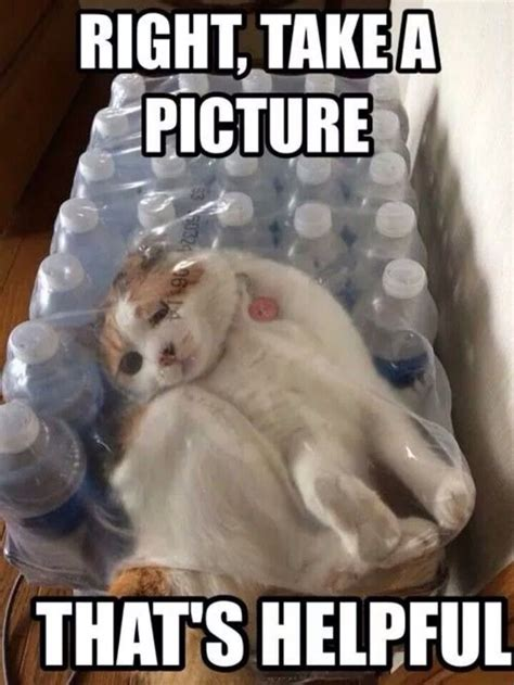 Funny Cat Memes - cat gets stuck in a pack of bottled water best funny