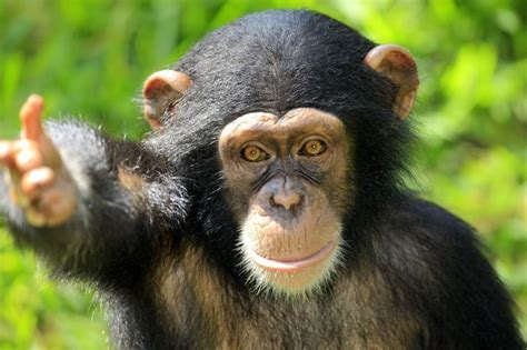 new year facts about the monkey 17 best images about 15 animal facts you forget on