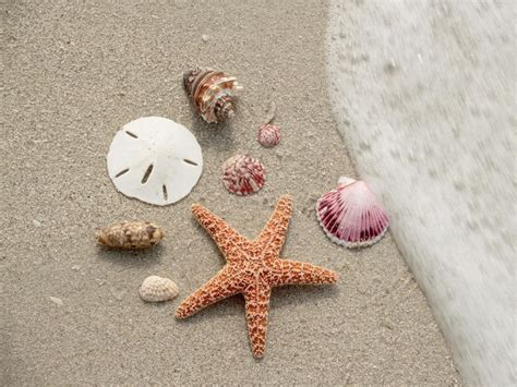best beaches for seashells five of the best beaches for beachcombing in the u s