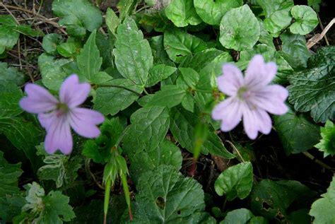 i giardini di marzo si vestono di nuovi colori la finestra di stefania i giardini di marzo si vestono di