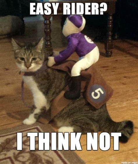 Halloween Cat Meme - 17 best images about cute cats on pinterest