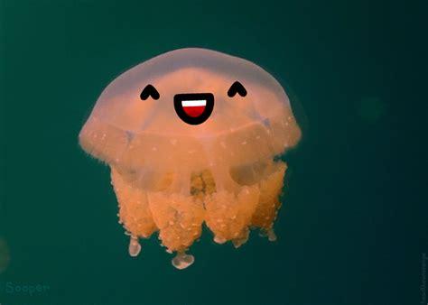 Real Jellyfish L by Des Gifs Avec Des Visages Le Procrastinateur