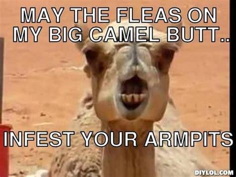 Big Ass Meme - 23 very funny camel meme photos and images