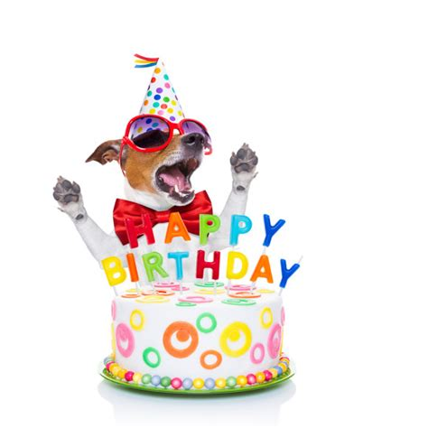 dogs birthday happy birthday song copyright discord ends on harmonious note