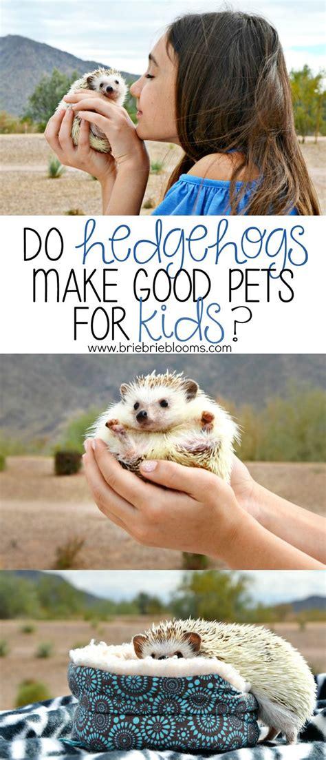 hedgehogs  good pets  kids mommy babies