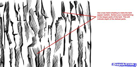 bark pattern drawing how to draw wood step by step trees pop culture free