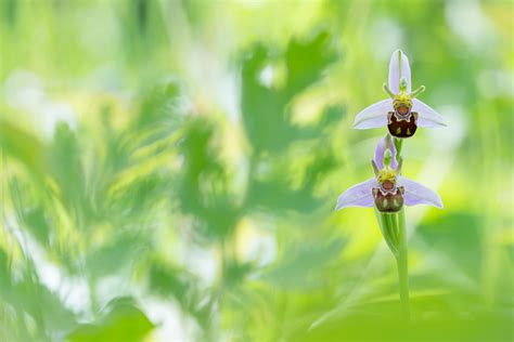 botanical colors edwin giesbers