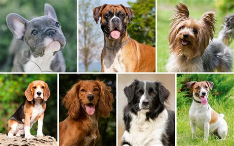 7 Cool Breeds Of Dogs by The 7 Types Of