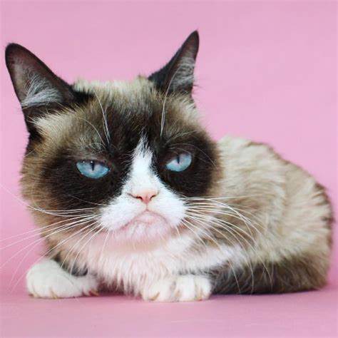 grumpy cat joins cats on grumpy cat becomes broadway as she joins the cast of cats