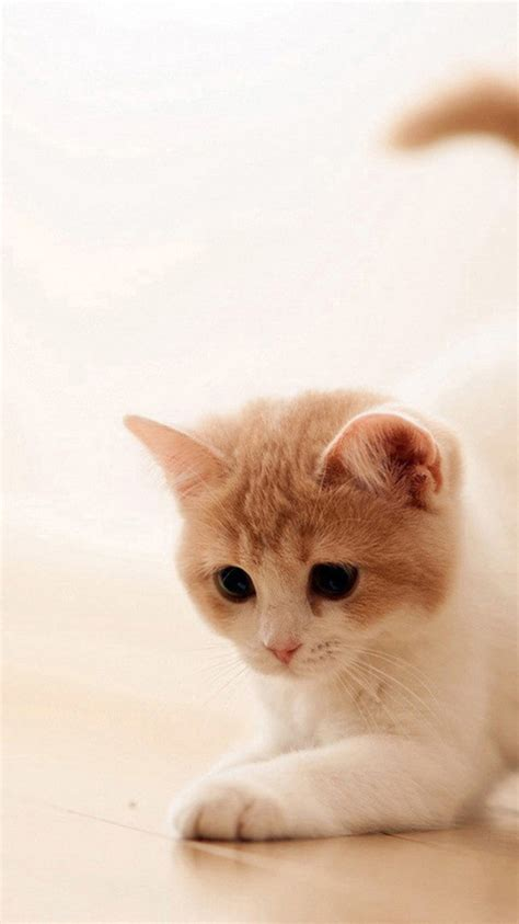 cute cat  iphone  wallpapers backgrounds  themes