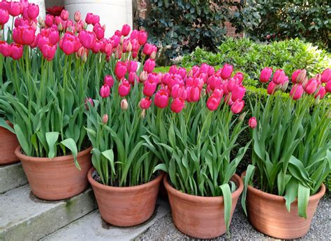 Tulpen Einpflanzen by 64 Outdoor Steps With Flower Planters And Pots Ideas