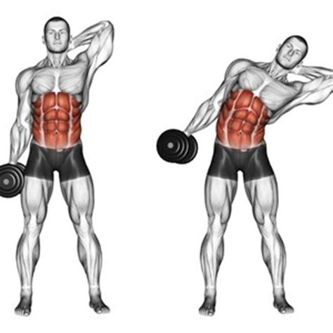 flessioni pettorali interni addominali obliqui muscoli info