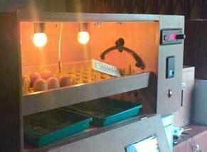 Mesin Tetas Telur Ayam Semi Otomatis beberapa kelebihan mesin tetas otomatis semi otomatis