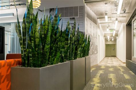 plant room divider interior landscaping by everything grows