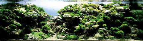 grand prize works  international aquatic plants