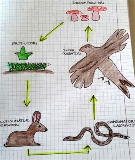esempio di catena alimentare reti alimentari nel bosco